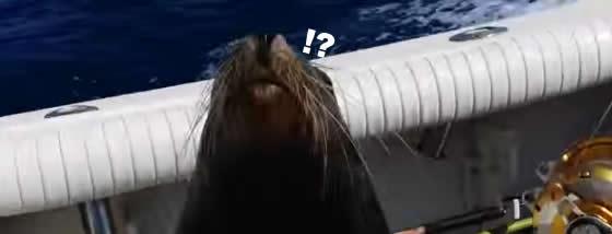 アシカが疾走する漁船に突然乗り込んで