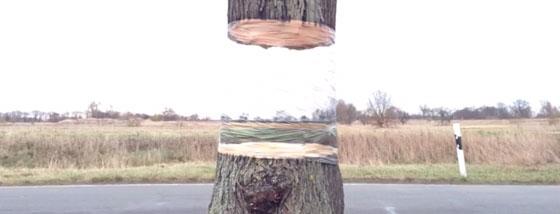 木が浮いてる!?