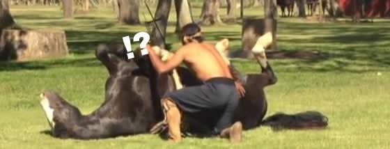 馬とヨガをする衝撃の動画