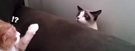 失礼します