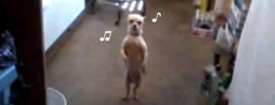 サルサダンスをするワンコちゃんの動き