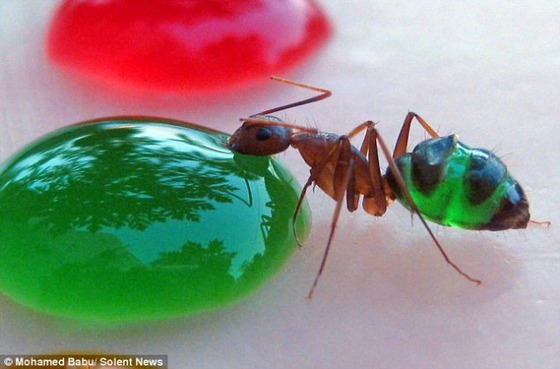 rainbow-ants-badu-2