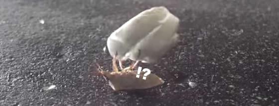 なんか特訓している虫