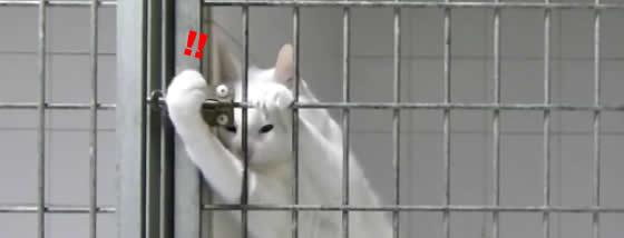鍵師になれる猫