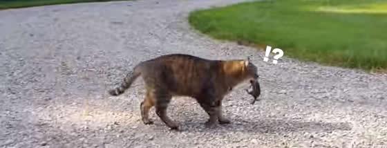 リスを咥えて自慢気に歩く猫ちゃんにまさかの攻撃が