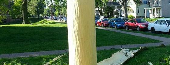 落雷によって身ぐるみを剥がされた木