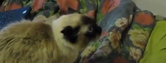 猫が怒ったー(泣)