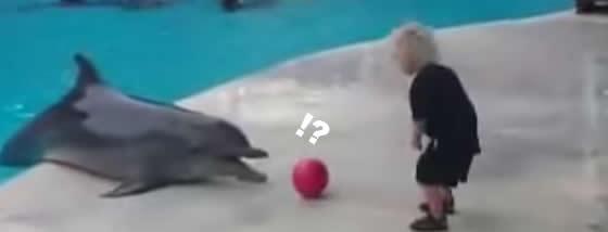 男の子とボール遊びをしてあげるイルカの心優しさ