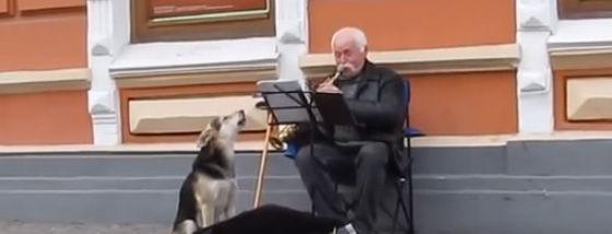 ストリートミュージシャンの強力な助っ人は野良犬さん