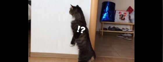 アレは何ニャ!?