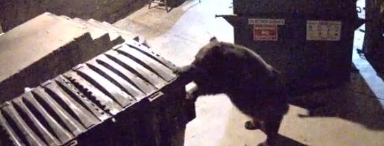 ゴミ箱を運ぶクマ