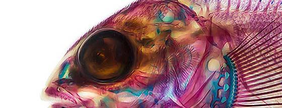 染色された海の生物達の生体構造が芸術的