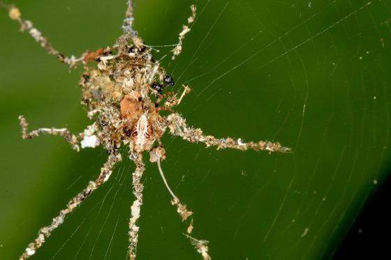新種のクモを発見!3