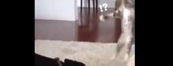 ドーベルマンにちょっかいを出す子猫ちゃん