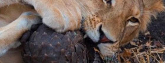 驚くべき動物達の護身術