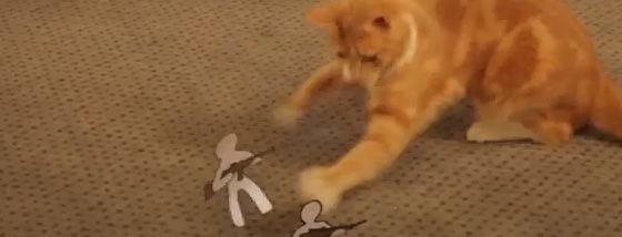 猫vs紙の兵隊さん