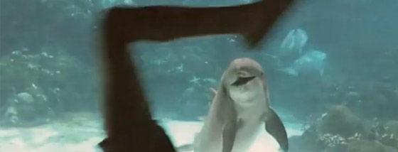 笑うイルカ