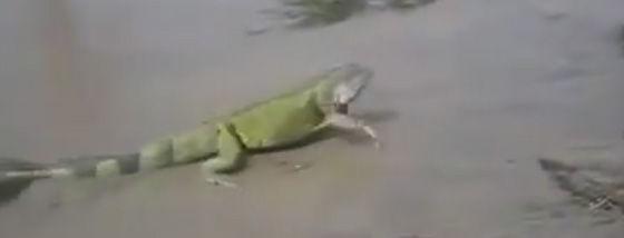 突然海からトカゲが現れた