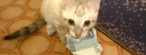 仔猫はお金を返すことを拒否する