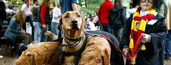 海外の犬のコスチュームが半端ない