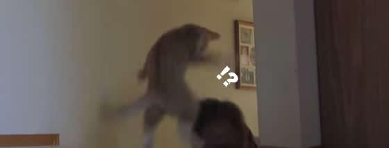 猫以上に楽しんでいる飼い主