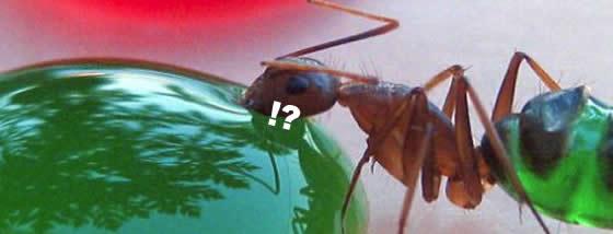 rainbow-ants-badu