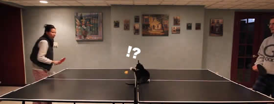 猫と一緒に卓球を楽しめば楽しさも倍増だ
