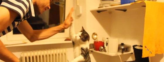 ハイタッチする猫が可愛すぎる