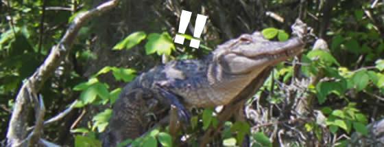 crocodiles-can-climb-trees1