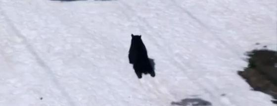 熊が雪の上を滑って遊ぶ