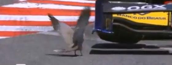 F1に轢かれそうになる鳥