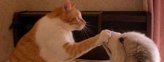 猫は静かにしろと手を置いてくる