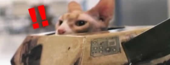 戦車に猫が乗っている