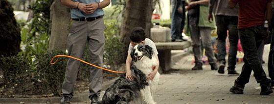 飼い主のいない犬