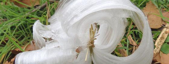 霜の花:自然が氷を押し出して優美な花を成形