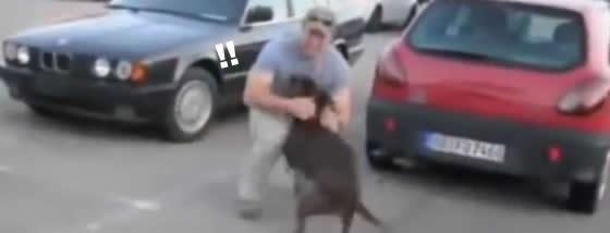 兵士が帰ってきた時の犬の喜びようったらありゃしない