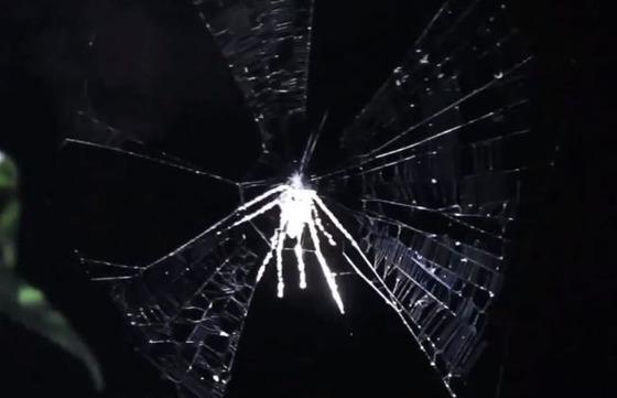 新種のクモを発見!