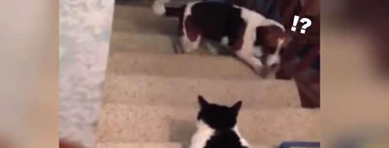 猫の横を通り抜けることが出来ない犬
