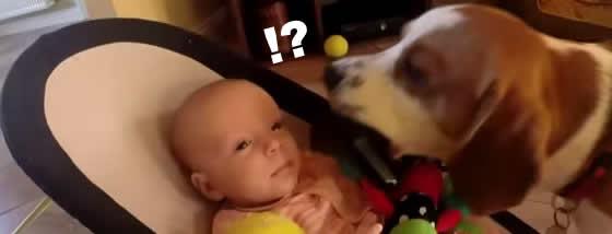 赤ちゃんの玩具を取って泣かせた犬は謝罪をする