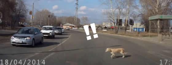 道路を横断する犬と人の優しさに感動した