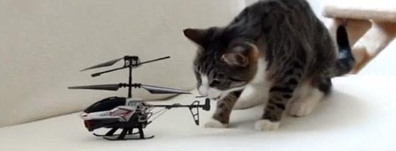 ヘリコプターvs猫