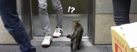 社内で普通にエレベーターに乗り込む猫ちゃん
