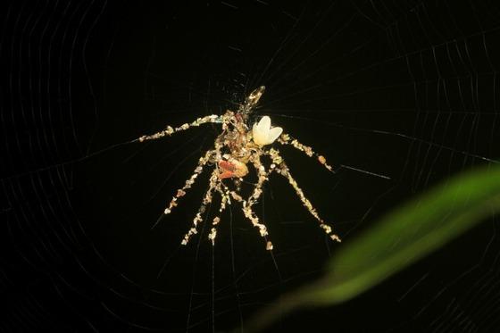 新種のクモを発見!2