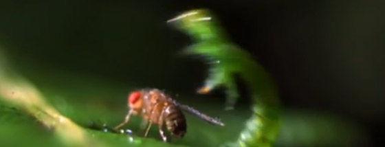 肉食毛虫の捕獲方法がまるで地球外生物