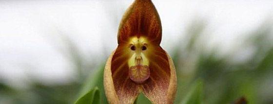 猿にそのものな花