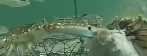 カニ漁の網の中にカメラを設置し海の中の驚くべき模様