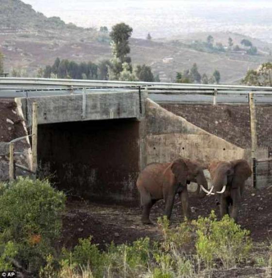 野生動物専用の人工通路10