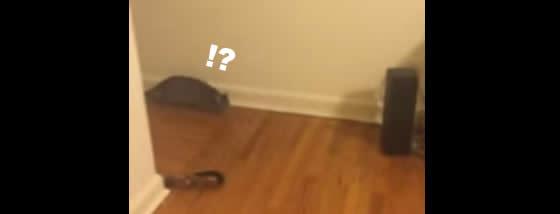 猫キャッチ