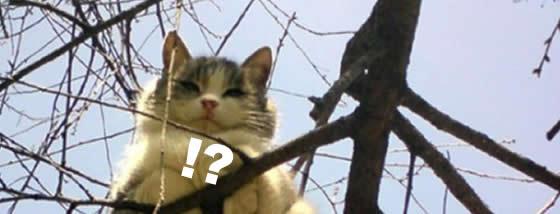 木の上で香箱座り1