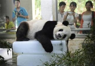 中国の避暑方法が凄い6